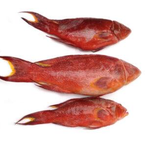 Cá mú đỏ làm sạch